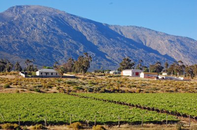 Karoo Vineyards3