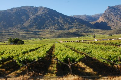 Karoo Vineyards6