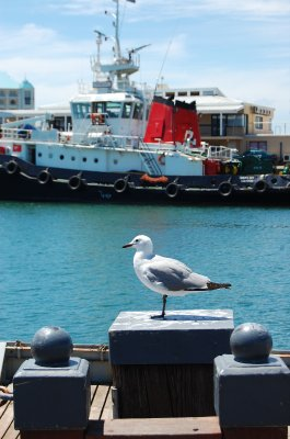 Seagull at waterfront