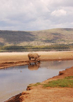 Rhino by the river