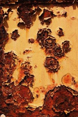 Roses of rust