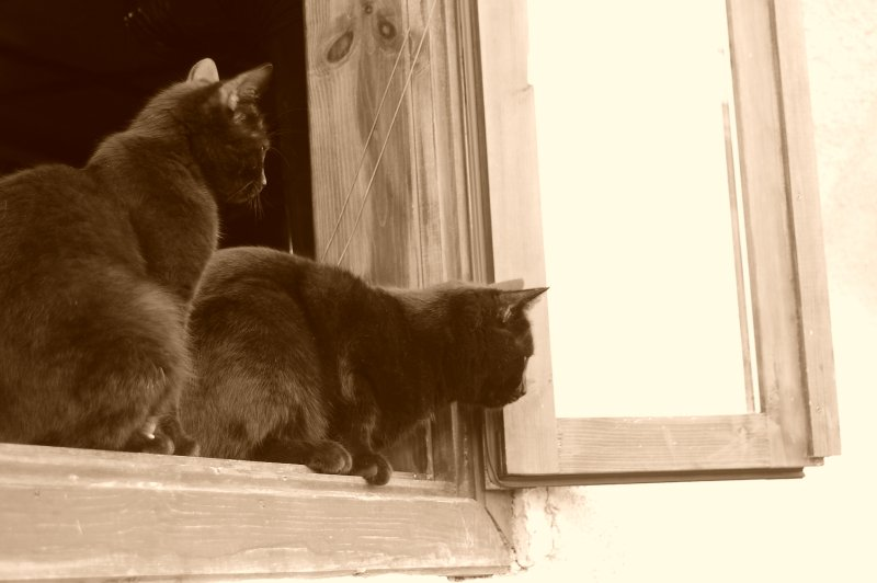 Cats on the windon