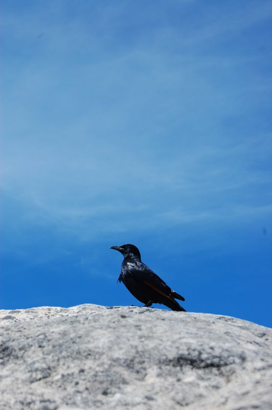 Bird on Mountain