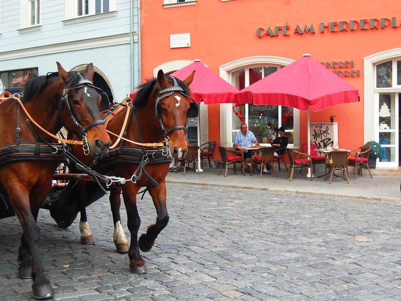 Horses in Bamberg