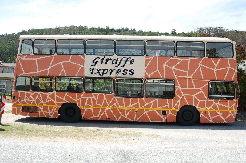 Giraffes on board!
