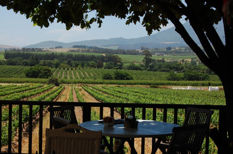 On a vineyard