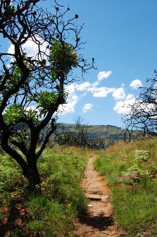 A path on Cathderal Peak