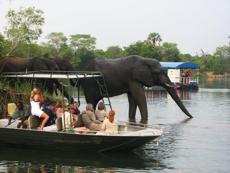 elephants taking a bath on the Zambezi river
