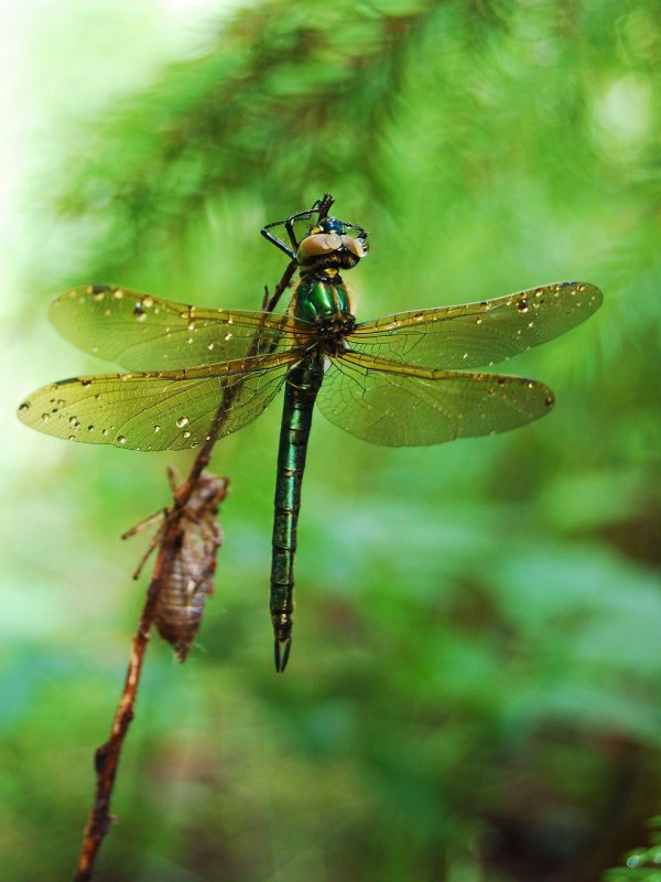 Dragonfly and a moth