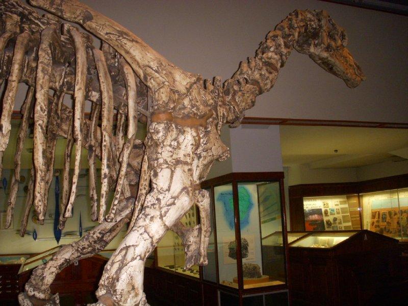 NHM allosaurus