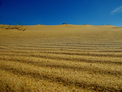 Sand Dune detail, Stockton Beach, NSW Australia.