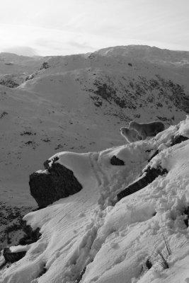 Helm Crag