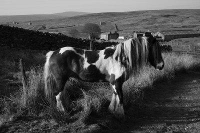 Horses in Upper Swaledale