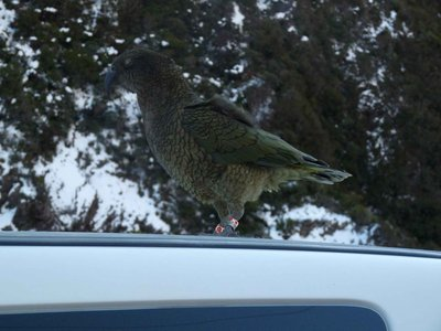 Kea on our van