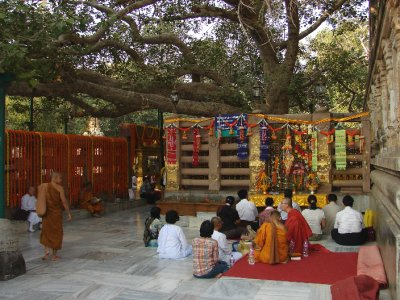Meditating Under The Bodhi Tree