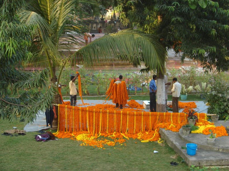 Making Marigold Garlands