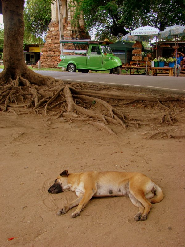 reclining dog next to reclining buddha