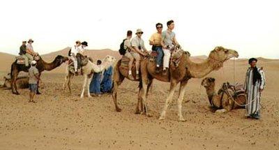 ride camels