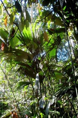 6_Palm_trees.jpg