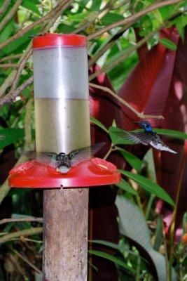 8_colibri.jpg