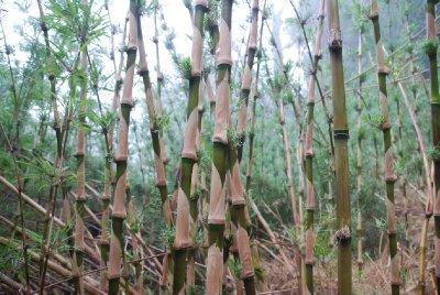 Rainforest in Valdivia