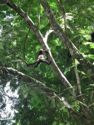 90_Monkey_jumping.jpg