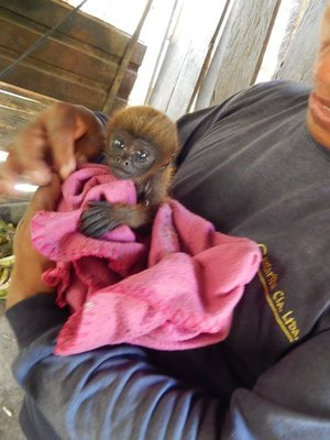 90_baby_monkey.jpg
