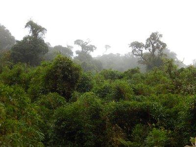 cloud_rainforest.jpg