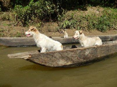 dogs_ready_to_board.jpg