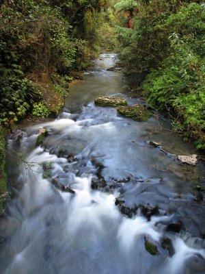 Along-the-Ruakuri-bushwalk