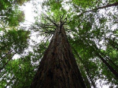 California..Rotorua.jpg