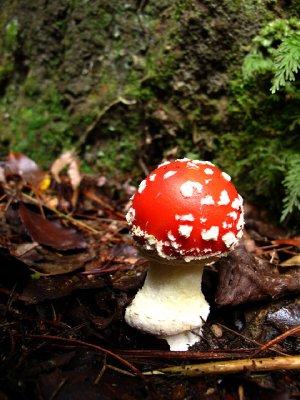 Omanawa-mushroom.jpg