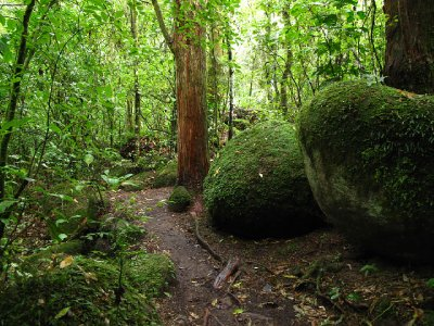 Waiere-trail.jpg