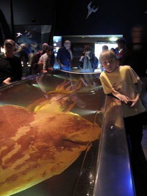 Jack at Te Papa with Collosal Squid