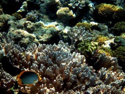 australia Great Barrier Reef 2