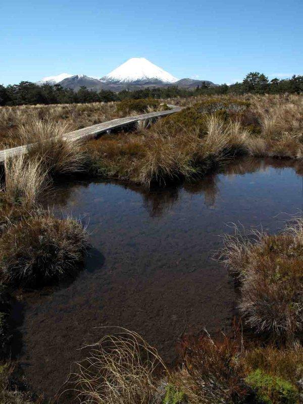 large_Tongariro_..ail_Bog.jpg