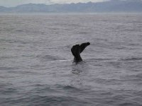 Kaikoura_Whale_3.jpg