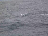 Kaikoura_Whale_4.jpg