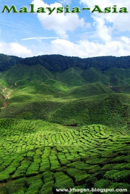Cameron Highlands Tea Plantation in Malaysia