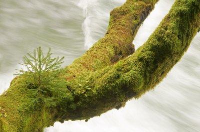 Bled_gorge..dited-2.jpg