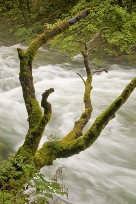 Bled_gorge..dited-3.png