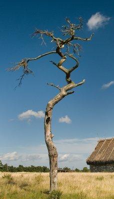 Faro_tree_08 26 09_2914_edited-2