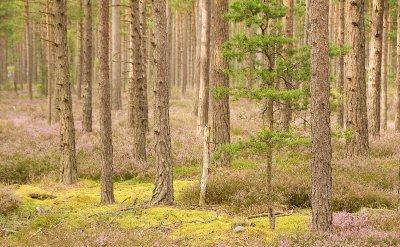 Faro_wood1..dited-3.jpg