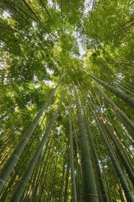 Kamakura_bamboo4__DSC9258