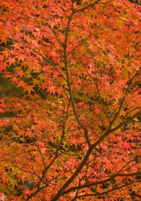 Nara_tree_..09_3921.jpg