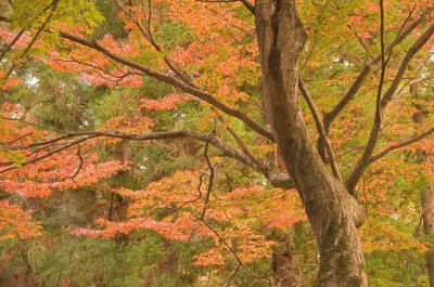 Nara_trees..09_3922.jpg