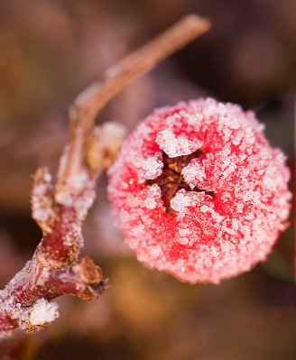 derbyshire_frozen_berry_12-