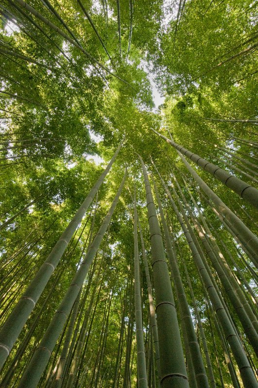 Kamakura_bamboo4__DSC9258