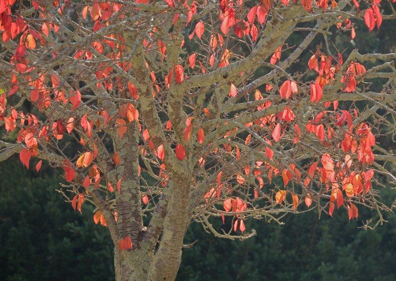 large_Nara_tree_..09_3911.jpg