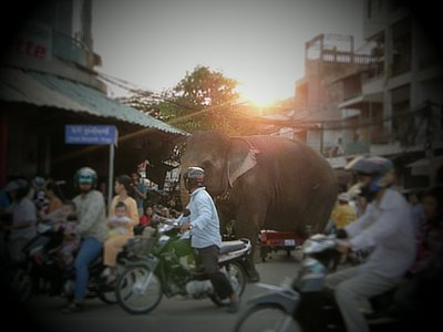 An elephant in the capital